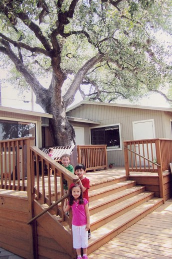 The big oak in the middle of Casa.